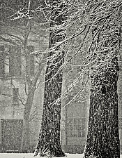 Snow Composition by Geoffrey Agrons (Black & White Photograph)