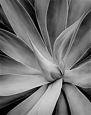 Plant #1 Hawaii by William Lemke (Black & White Photograph)