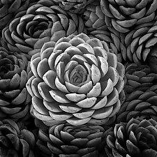 Plants Near the Golden Gate by William Lemke (Black & White Photograph)