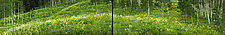 Wildflower Diptych by Terry Thompson (Color Photograph)