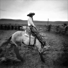 A Fresh Horse by Adam Jahiel (Black & White Photograph)
