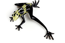Black and Yellow Frog by Jennifer Caldwell (Art Glass Sculpture)