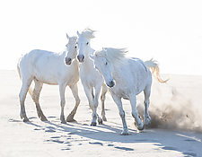 Three Play at the Beach by Carol Walker (Color Photograph)