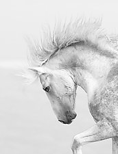 Cloud's Pride by Carol Walker (Black & White Photograph)