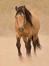 Out of the Dust by Carol Walker (Color Photograph)