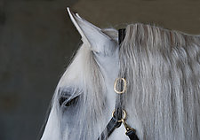 Bridle by Julie Betts Testwuide (Color Photograph)