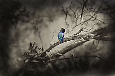 Bird by Lori Pond (Color Photograph)