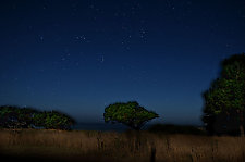Midnight by Lori Pond (Color Photograph)