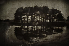 Grove 1820 by Lori Pond (Black & White Photograph)