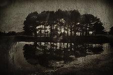 Grove 1820 by Lori Pond (Black & White Photograph)