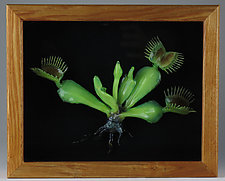 Dionaea Muscipula by Bandhu Scott Dunham (Art Glass Wall Sculpture)