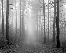 Path & Fog - Kettle Moraine by William Lemke (Black & White Photograph)