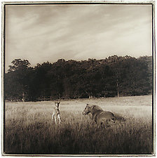 Foal, 2003 by Janet Woodcock (Black & White Photograph)
