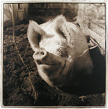 Pearly, 2000 by Janet Woodcock (Black & White Photograph)