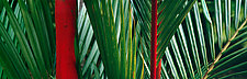 Red Palm by Terry Thompson (Color Photograph)