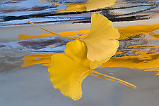 Dream Leaves I by Patricia Garbarini (Color Photograph)