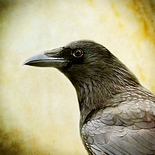 Song of a Crow by Yuko Ishii (Color Photograph)