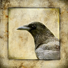Healing Crow - Medium by Yuko Ishii (Color Photograph)