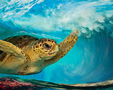 Loggerhead In Wave-Large by Melinda Moore (Color Photograph)