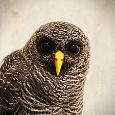 Healing Owl IV - Medium by Yuko Ishii (Color Photograph)
