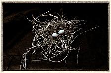 Eggs by Lori Pond (Color Photograph)