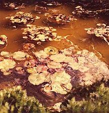 Domaine de Perrotin by Julie Betts Testwuide (Color Photograph)
