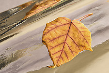 Dream Leaves II by Patricia Garbarini (Color Photograph)