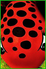 Bug Eyed by Maurine Sutter (Color Photograph)