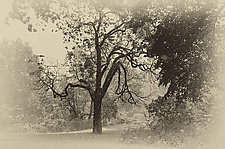 Central Park by Lori Pond (Black & White Photograph)