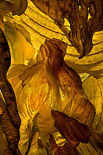 Hosta Leaves 13 by Ralph Gabriner (Color Photograph)