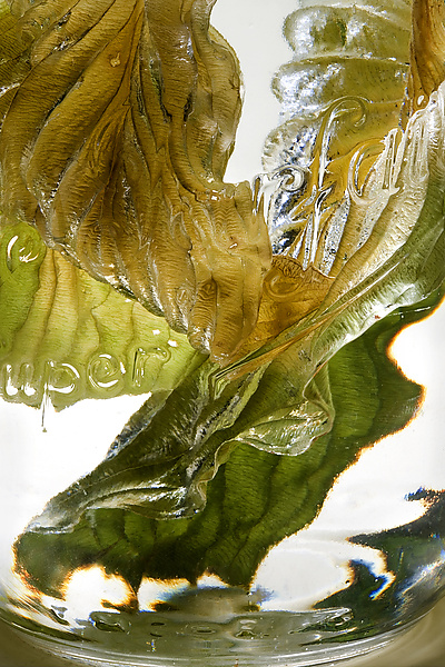 Hosta Leaves in Water