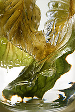 Hosta Leaves in Water by Ralph Gabriner (Color Photograph)