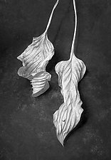 Hosta Leaves 8 by Ralph Gabriner (Black & White Photograph)