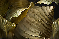 Hosta Leaves 6 by Ralph Gabriner (Color Photograph)