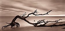 Jekyll Island by Joel Anderson (Black & White Photograph)