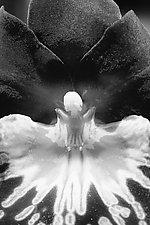 Phantasma by Katherine Morgan (Black & White Photograph)