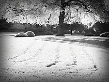My Secret Garden by Lori Pond (Black & White Photograph)