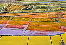 Harvest Time #2 by James Robison (Giclée Print)