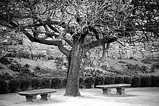 Come Sit by Tanya Hoggard (Black & White Photograph)