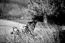 Bench by Tanya Hoggard (Black & White Photograph)