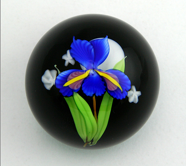 Blue Iris on Black Paperweight