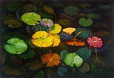 Lily Pod by Scott Zupanc (Giclée Print)