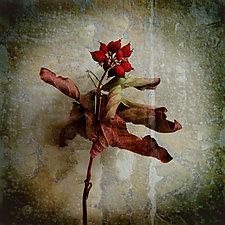 Passion by Yuko Ishii (Color Photograph)