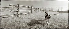 Calhoon, the Coon Hound, 1983 by Mel Curtis (Black & White Photograph)