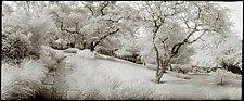 Dumbarton Oaks Path, 1987 by Mel Curtis (Black & White Photograph)