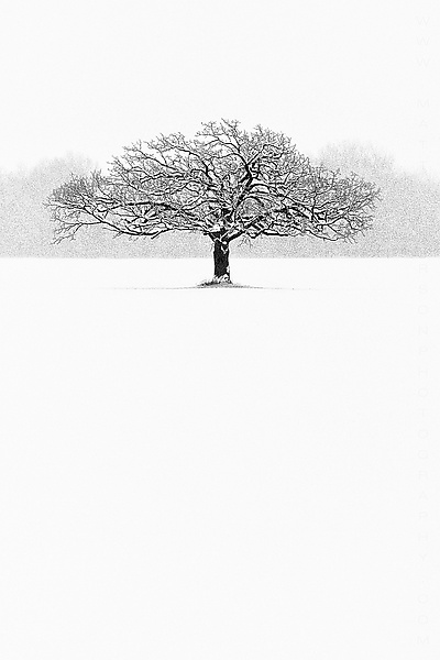 Winter Tree #7 ( So Alone )