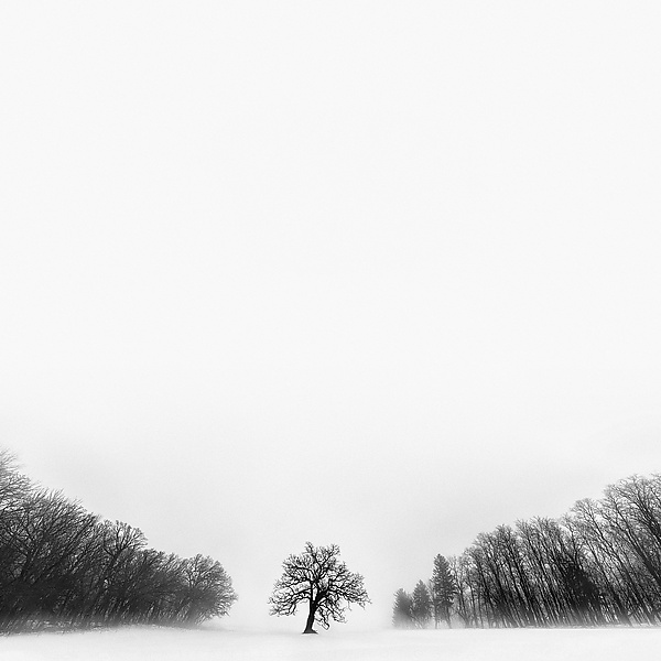 Winter Tree #10