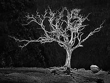 Burning Bush by Matt Anderson (Black & White Photograph)
