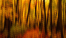 Fall Tapestry by Matt Anderson (Color Photograph)