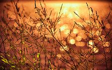 Dreams of Summer by Matt Anderson (Color Photograph)